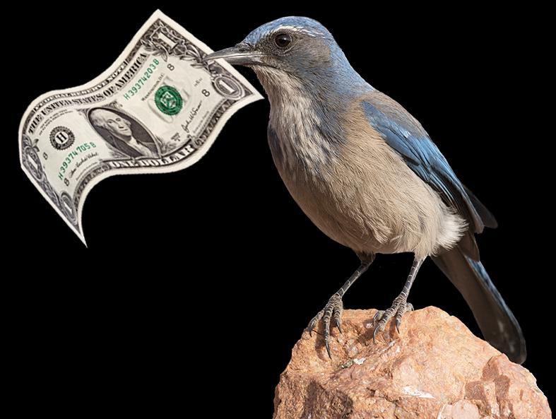 donate_bird